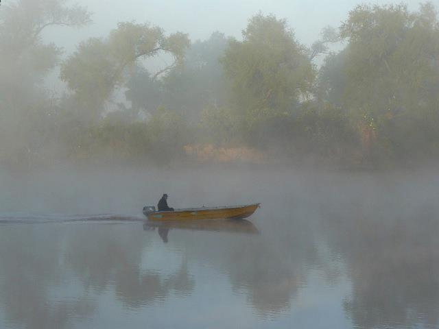 Foto: Guarú del río
