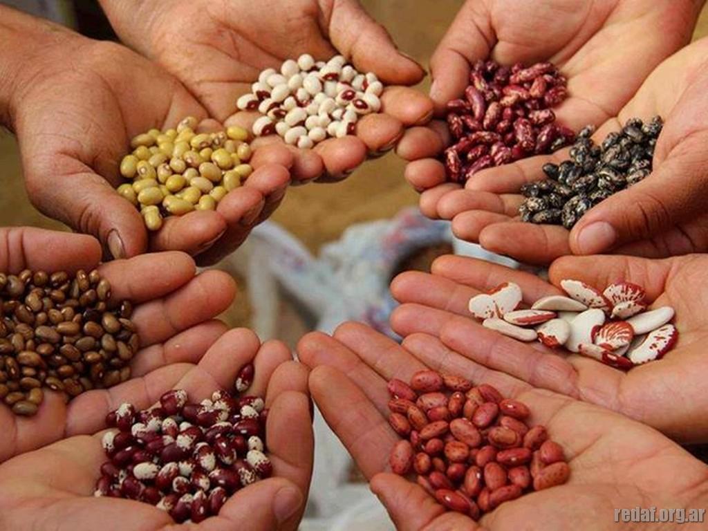 Las leyes de semillas aniquilan la soberan a y la for Plantar hortensias semillas