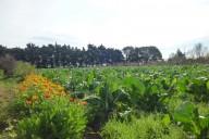 produccion-agroecológica